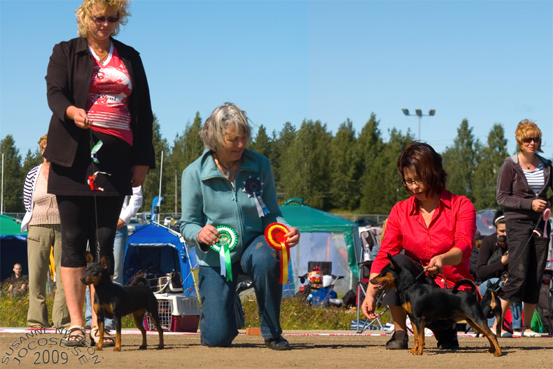 BOS-A'Dreams Black Pantera & BOB-Aurra Sing Golden Edition<br /><br>Judge: Lisbet Ramsing, Denmark